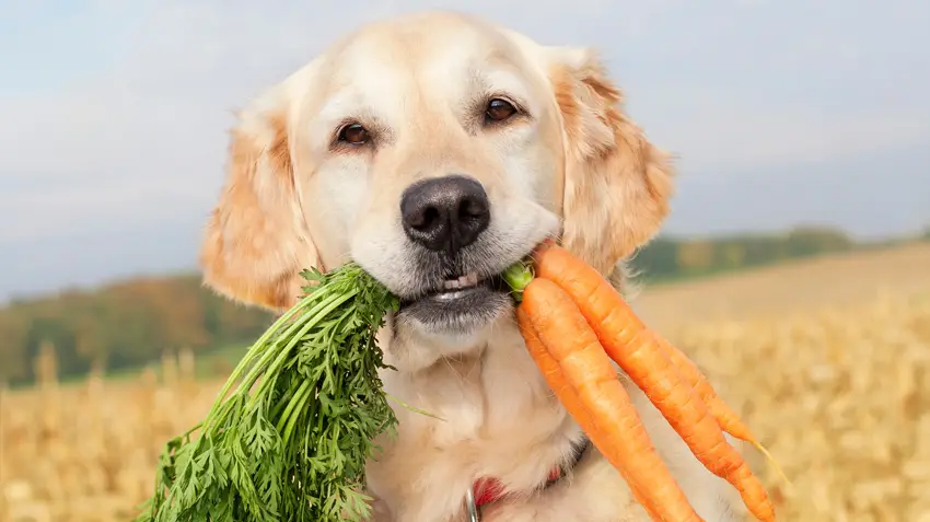 Food Cures for Dogs